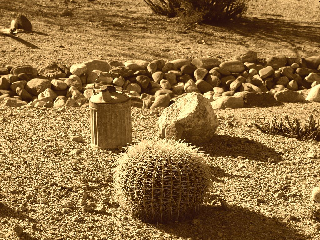 Rock and Cactus Garden